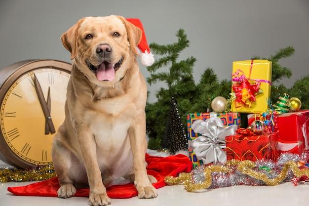 Labrador com chapéu de papai noel. guirlanda de ano novo Foto gratuita