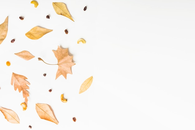 Lado de outono lado de folhas e sementes de outono Foto gratuita