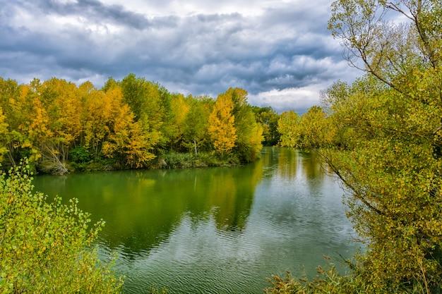 Lago com árvores refletidas na água Foto Premium