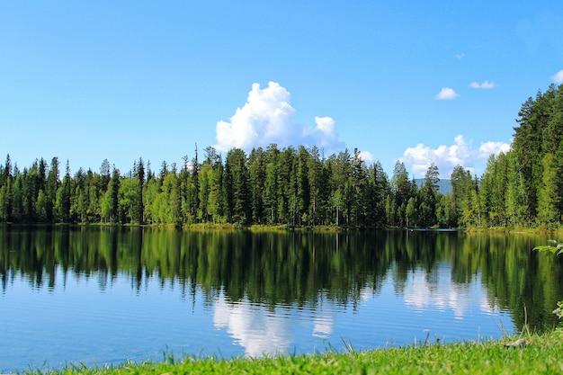 Lago da floresta com reflexo das árvores e nuvens na água Foto Premium