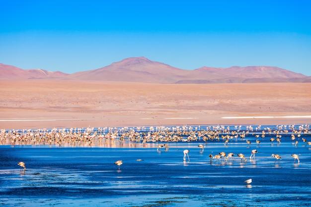 Lago laguna colorada Foto Premium