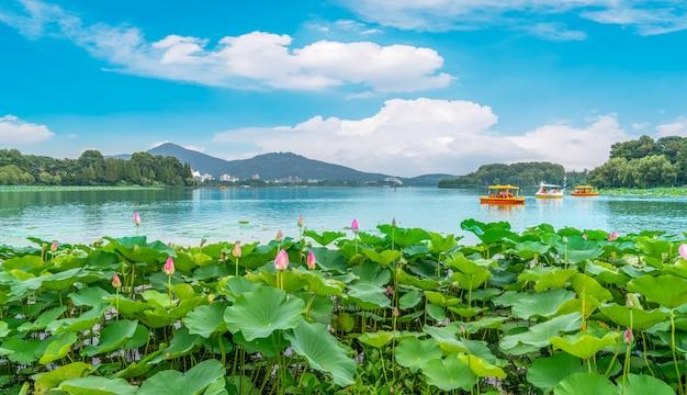Lago lotus lago e paisagem paisagem Foto Premium