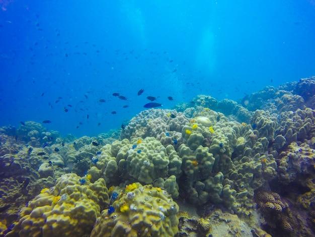 Lagoa luz solar peixes animal exótico Foto gratuita
