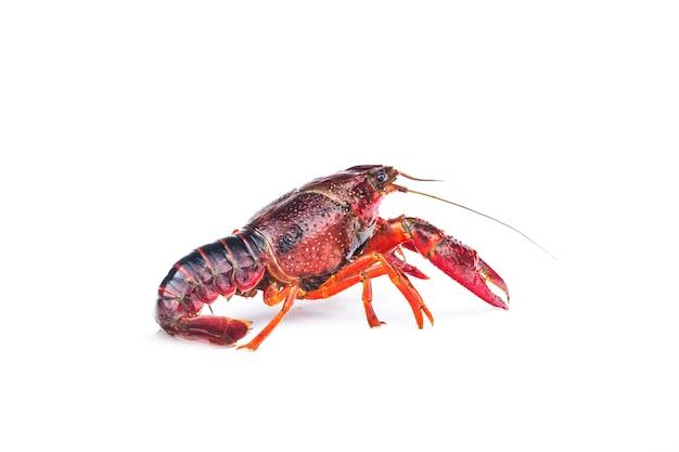 Lagostas, lagostas isoladas no branco Foto Premium