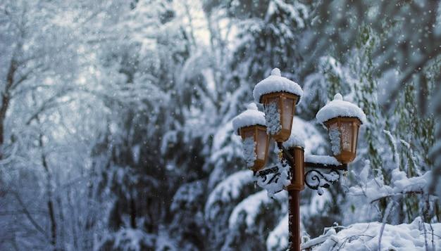 Lâmpada atrás de várias árvores cobertas de neve durante o inverno Foto gratuita