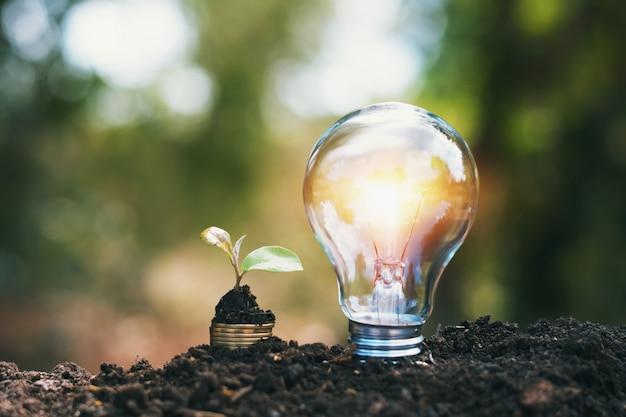 Lâmpada no solo com uma planta jovem, crescendo na pilha de dinheiro Foto Premium