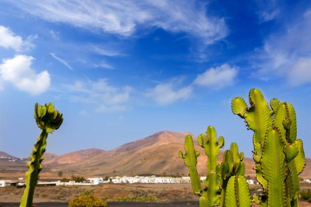 Lanzarote yaiza com cactos e montanhas Foto Premium