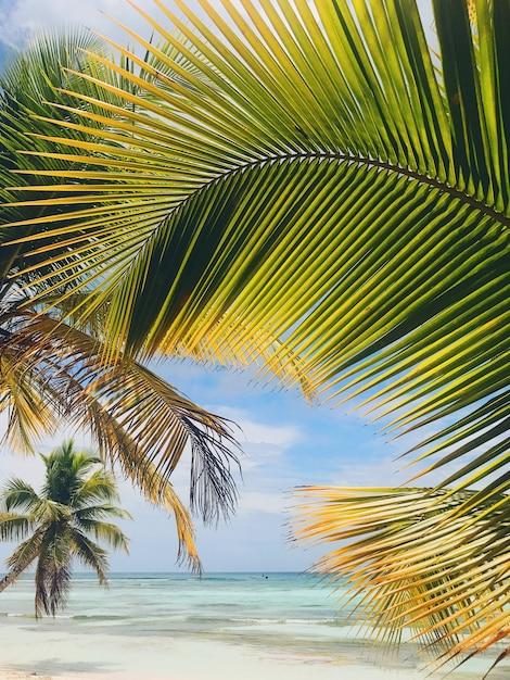 Largas folhas de palmeira levam até os céus Foto gratuita