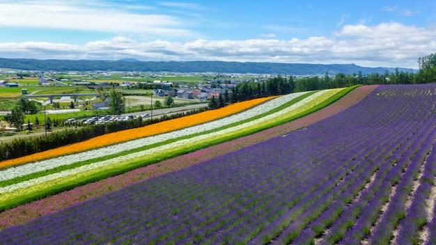 Lavanda e outro campo de flor em hokkaido - japão, fundo de natureza Foto Premium