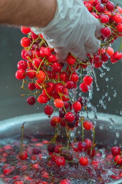 Lavando frutas vermelhas cereja na água Foto gratuita