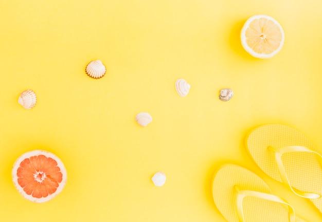 Lay plana de conchas e frutas aquáticas Foto gratuita