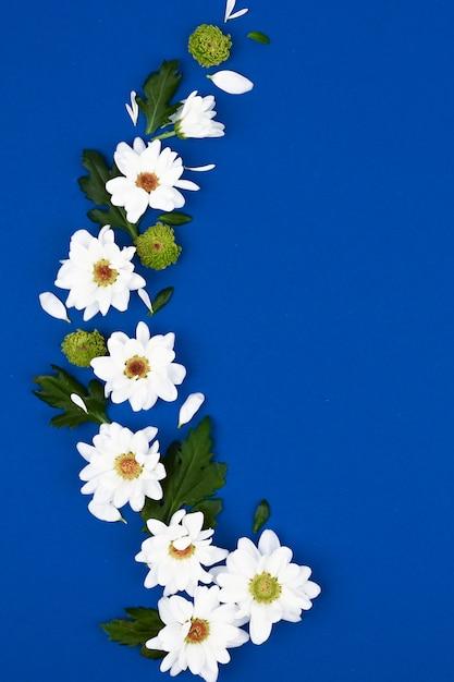 Layout criativo com flores brancas e folhas verdes em um fundo azul. conceito de primavera. vista plana leiga, superior. Foto Premium