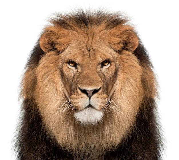 Leão em branco em um estúdio Foto Premium