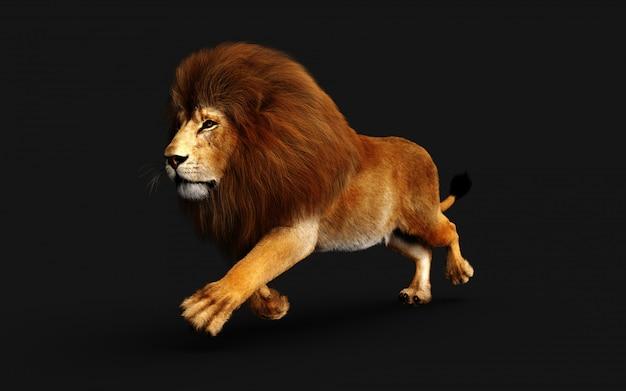 Leão perigoso isolado no preto, com traçado de recorte Foto Premium