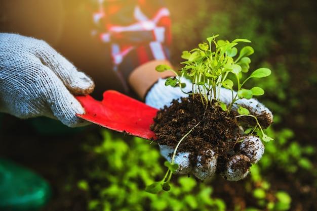 Legumes de plantas de mulher Foto Premium
