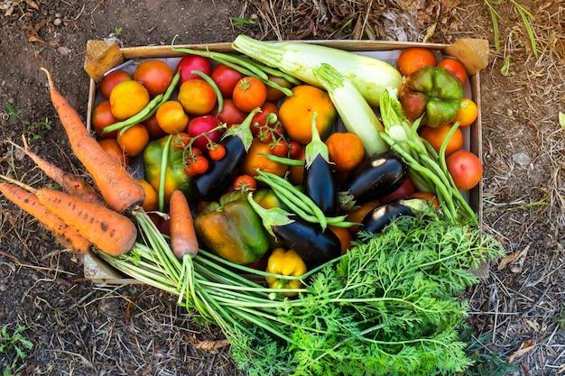 Legumes orgânicos da horta caseira Foto Premium