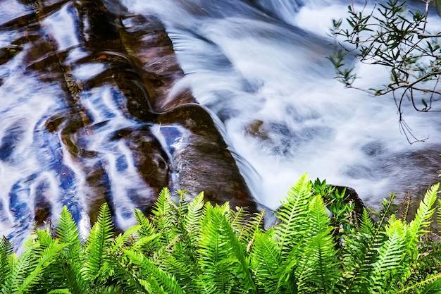 Liffey falls state reserve na região de midlands de tasmânia, austrália. Foto Premium
