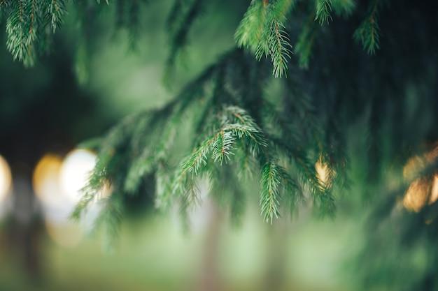 Linda árvore conífera Foto Premium