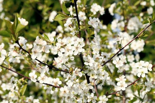 Linda flor desabrochando Foto gratuita