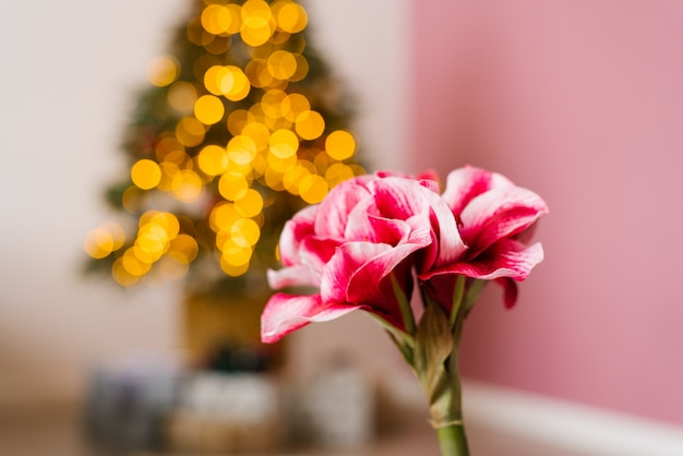 Linda flor rosa em fundo de luzes de natal. copie o espaço Foto Premium