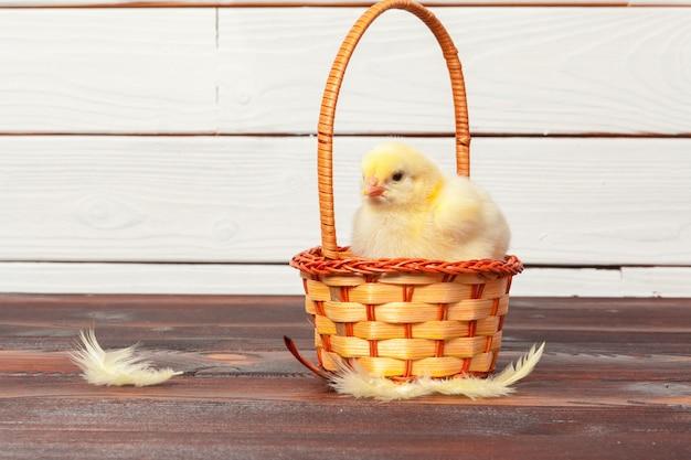 Linda galinha no ninho Foto Premium