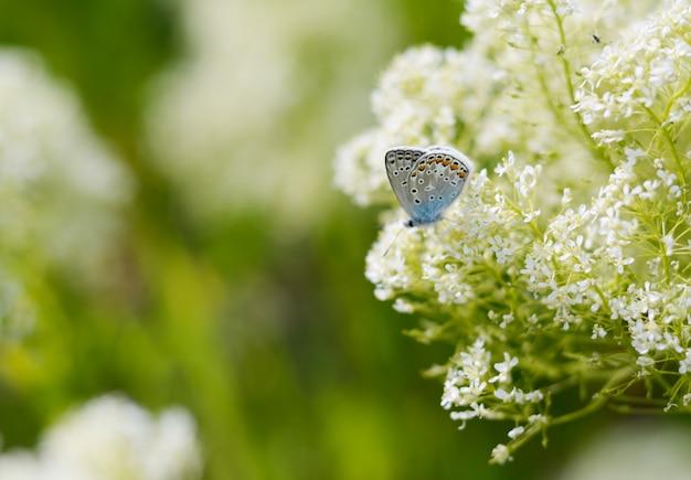 Linda pequena borboleta azul Foto Premium
