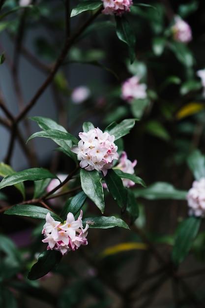 Linda pétala de rosa flor no jardim Foto gratuita
