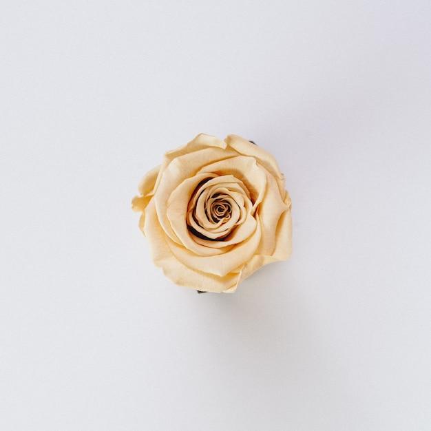 Linda única cor creme isolada Foto gratuita