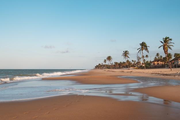 Linda vista de palmeiras na praia do norte do brasil, ceará, fortaleza / cumbuco / parnaíba Foto gratuita