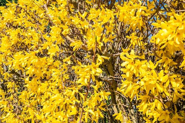 Lindas flores amarelas na árvore Foto gratuita