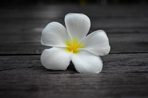 Lindas flores brancas parecia fresco em um fundo natural Foto Premium