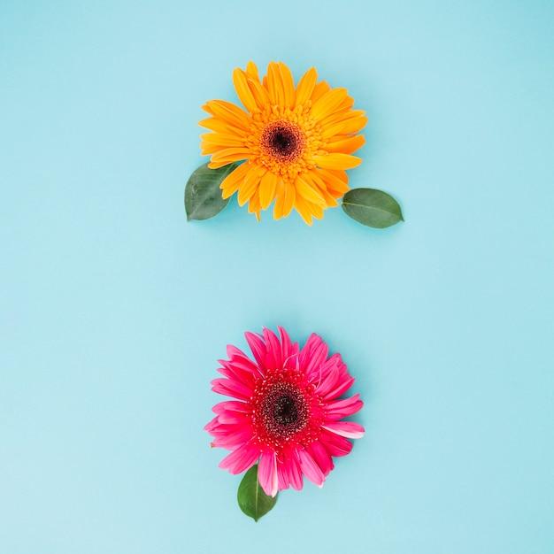 Lindas Flores Brilhantes No Azul Baixar Fotos Gratuitas