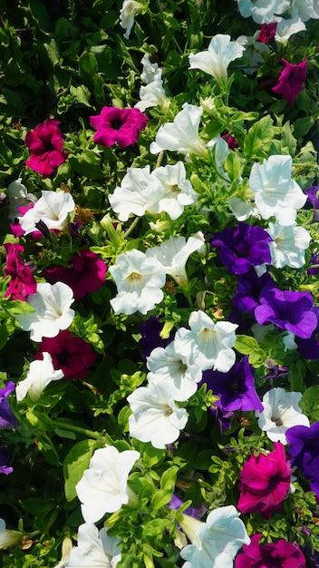 Lindas Flores Coloridas Baixar Fotos Premium