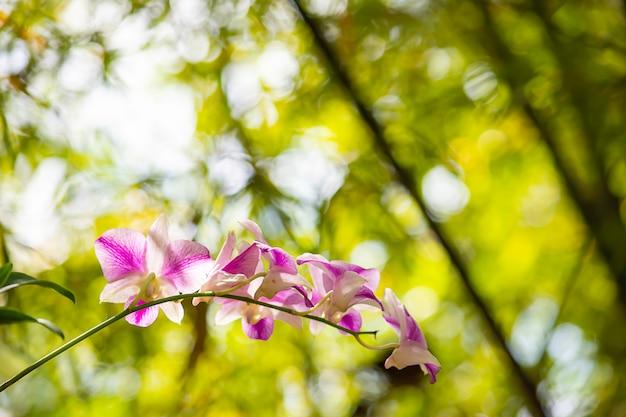 Lindas flores cor de rosa no jardim. Foto Premium
