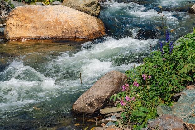 Lindas flores cor de rosa perto do riacho de montanha. pedregulhos grandes em close-up de fluxo de água rápido. corredeiras do rio com copyspace. fluxo rápido perto de pedras molhadas. fundo de ondas limpas. rica flora das terras altas. Foto Premium