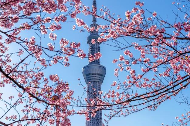 Lindas flores de cerejeira e a árvore do céu de tóquio na primavera em tóquio, japão. Foto gratuita