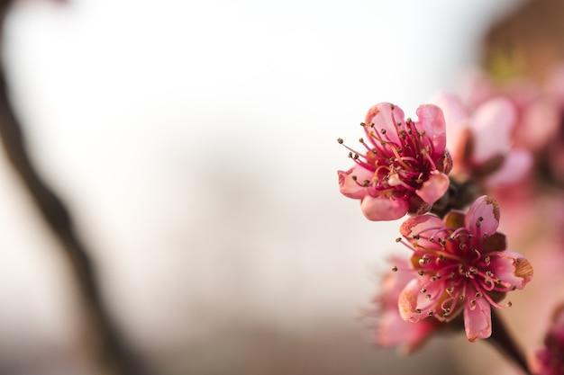 Lindas flores de cerejeira em um jardim capturadas em um dia ensolarado Foto gratuita