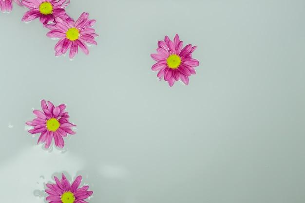 Lindas Flores Na água Baixar Fotos Gratuitas