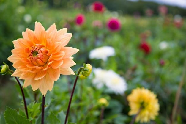 Lindas flores na primavera Foto Premium