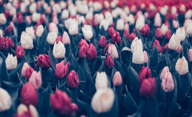Lindas flores no parque primavera Foto Premium