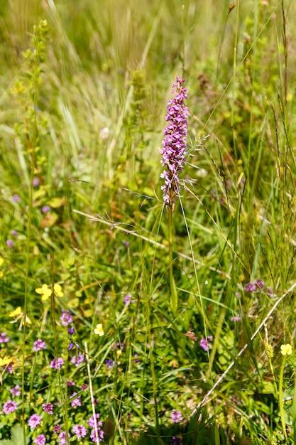 Lindas flores silvestres em um prado Foto Premium