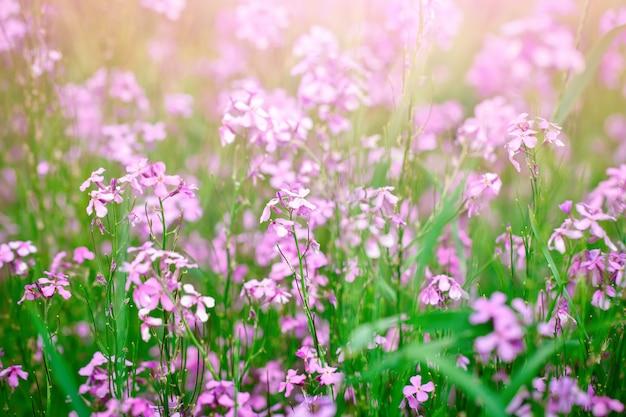 Lindas flores silvestres na grama verde. Foto Premium