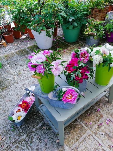 Lindas peônias em vaso, balde e panelas Foto Premium