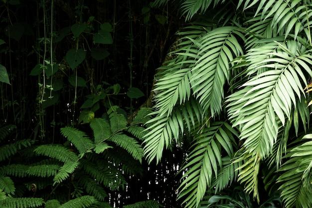 Lindas plantas exóticas e folhas Foto Premium