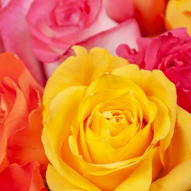 Lindas Rosas Amarelas Vermelhas E Cor De Rosa Baixar Fotos Premium