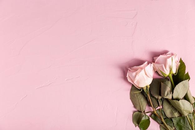 Lindas rosas com espaço de cópia Foto gratuita