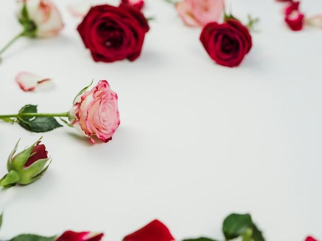 Lindas rosas no fundo liso Foto gratuita