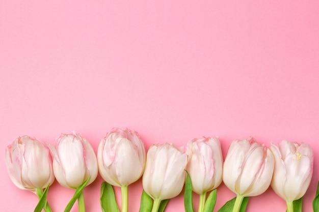 Lindas tulipas cor de rosa e brancas em fundo rosa Foto Premium