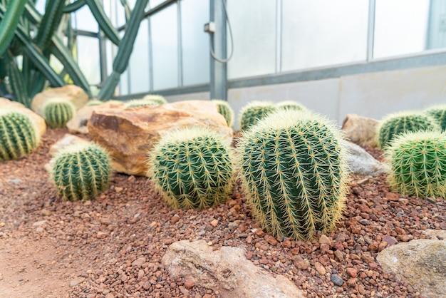 Lindo cacto no jardim do jardim botânico queen sirikit chiang mai, tailândia Foto Premium