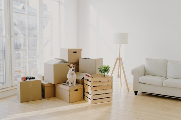 Lindo cão doméstico posa perto de caixas de papelão na espaçosa sala com sofá Foto Premium